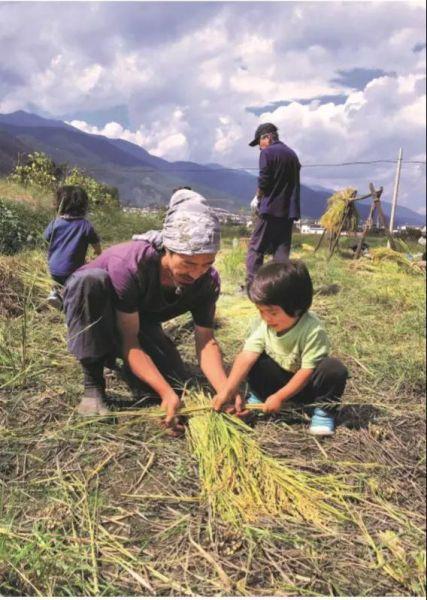 六带着和空、结麻收稻。在田边长大的孩子,会像自然一样阔大吧。