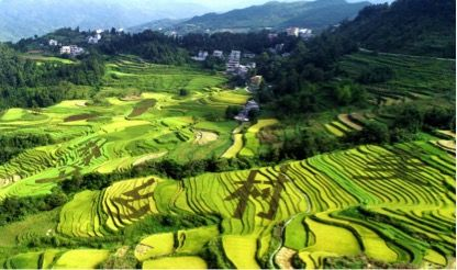 中国一汽在凤山文里村开展高山蔬菜种植项目